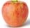 Picture of Honey Crisp apple
